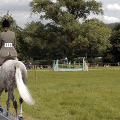Far-field-horse