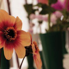 Flower-hall-copy