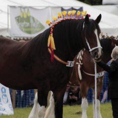 Horse-show-2