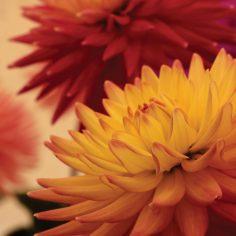 pointy-flowers