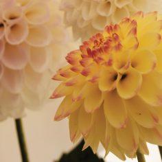 purple-white-flower